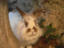 Blanchette, rongeur Lapin