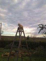 Eddy, chat Gouttière