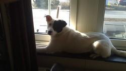 Aaron, chien