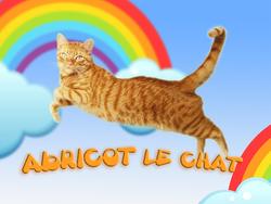 Abricot, chat Européen