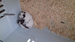 Abricot, rongeur Lapin