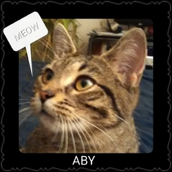 Aby, chat