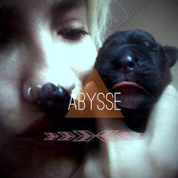 Abysse, chien