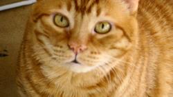 Rizzou, chat