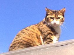 Accro, chat Gouttière
