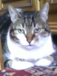 Achaka, chat Gouttière