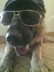 Bonnie, chien Berger allemand