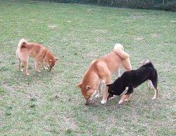 Coco , chien