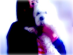 Poppy, chien Bichon maltais