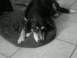 Ulysse, chien