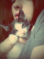 Aela, chat Siamois