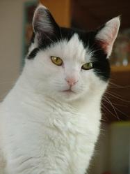 Aela, chat Gouttière