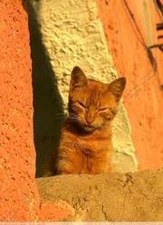 Miggo, chat Gouttière