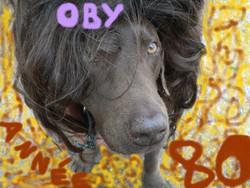 Oby, chien Labrador Retriever