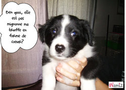 Bidouille, chien Border Collie
