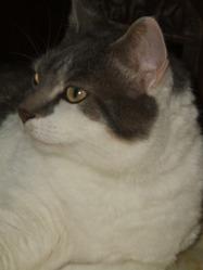 Pitou, chat Gouttière
