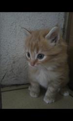Hauru, chat Gouttière