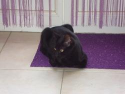 Aibo, chat Européen