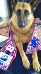 Aika, chien Berger allemand