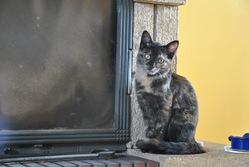 Aiko, chat Gouttière