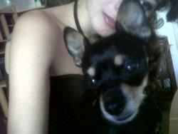 Akamaru, chien Pinscher