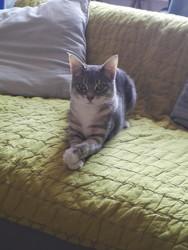 Akame, chat Gouttière