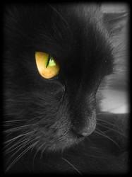 Akuma, chat Gouttière