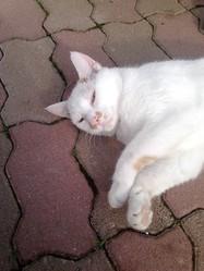 Albert, chat Gouttière