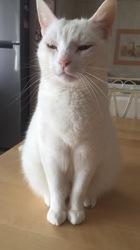 Albie, chat Gouttière