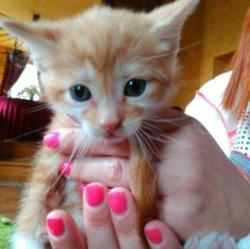Albus, chat Gouttière