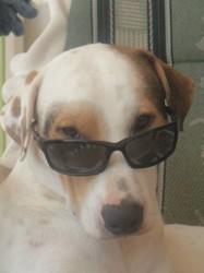 Aldwinn, chien