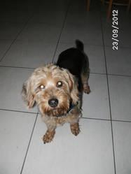 Alex, chien