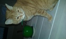 Alf, chat