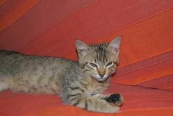 Alfa, chat Gouttière