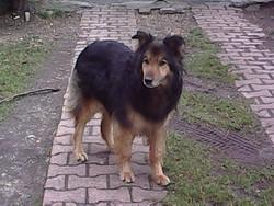 Alias, chien