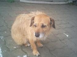 Alina, chien