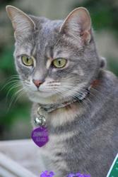 Alizée, chat Gouttière