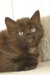 Louna, chat Gouttière