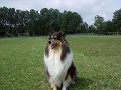 Allika, chien