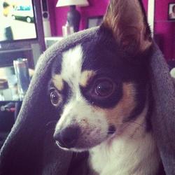 Ally, chien