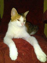 Ally, chat Gouttière