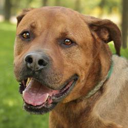 Altas, chien
