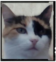 Amélie, chat