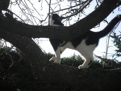Améthyste, chat Gouttière
