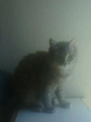 Amour, chat Gouttière