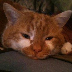 Anatol, chat Gouttière