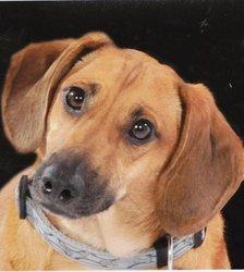 Andy, chien Teckel