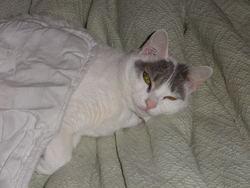 Angèle, chat Gouttière