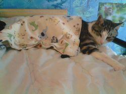 Angie, chat Gouttière