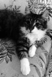 Angor Alias Pépère, chat
